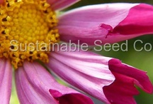 Flowers / All sorts of flowers.   / by Sustainable Seed Co.