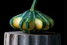 Squash / by Sustainable Seed Co.