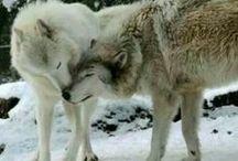 wolf♥