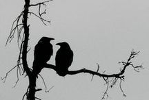 Crows and Ravens / Creatures not to be ignored...they can bring joy, they can bring warnings, they can bring great luck, and they can warn of death...the Morrighan's favourite creature )O(