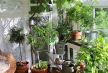 Trädgården en fredag