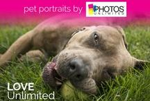 Pet Photos / Our new on-location photographer services are perfect for the whole family! Even Pets! We have highly trained photographers with pet photography experience. We're excited to meet you and your pets!