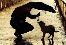 """Compassion / Kindness / Compassion is often regarded as emotional in nature, and there is an aspect of compassion which regards a quantitative dimension, such that individual's compassion is often given a property of """"depth,"""" """"vigour,"""" or """"passion."""" The etymology of """"compassion"""" is Latin, meaning """"co-suffering."""" More virtuous than simple empathy, compassion commonly gives rise to an active desire to alleviate another's suffering. To learn more about compassionate care, please visit us at www.paradigmmalibu.com"""