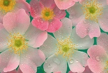 bloemen / by Bloesemm