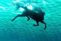 Fun Horse Photos / Memorable images