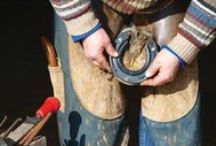 Hoof Care / No hoof, no horse - keep your horse's feet healthy and strong.