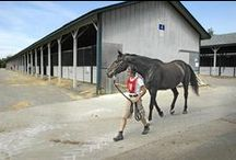 Horse Business Management / Practical, legal, insurance and other tips for running a horse business.