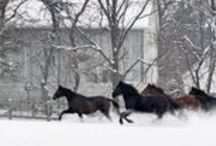 2015 HPG Photo Contest Winners / Equine Photography