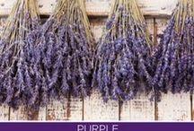 Color - Purple / Violet