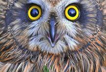 (͡๏̯͡๏)Búhos - Owls / Búhos, Lechuzas, Owls