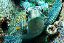 ღTortugas - Galápagos  / Mis favoritas las Tortugas en general!ღ