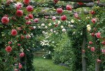 Horta & Jardinagem
