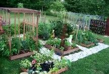 Ministry Ideas: Community Gardens