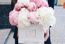 → Flowers
