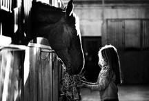 Horse / by Jessie Lowrey