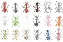 Ants / Mieren