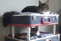 Cats ~ Beds, Toys and More / Your cat deserves the cutest furniture and the fluffiest toys! It doesn't have to look ugly!