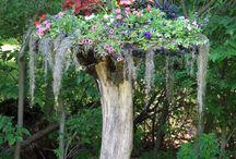 Garden Tips and Ideas