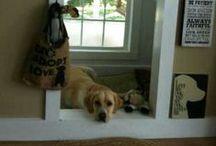 Dog Lover's Home / The perfect home needs a dog