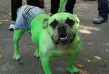 Pet Costumes / Awesome costumes for your furry pal