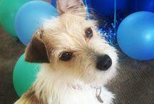 Oscar / Dr Wholley's dog - Oscar