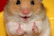 Smiling Animals / These happy animals will make you smile too...