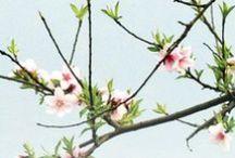 Pintura china / Usos y tradiciones de la cultura sobre la pintura china. Una aproximación a obras pictóricas a lo largo de la historia