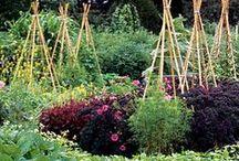 Dream Garden / by Dawn Roberson
