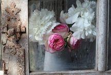 Flowers / by Jody Unverrich