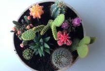 Lulu loves gardens / by Lulu Bliss {Dolin}