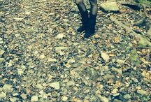 Vestito  / Vestito con coda e maniche a sbuffo realizzato con tessuto tartan goffrato in lana foderato rifinito con pizzo. Accessorio nastro elasticizzato di velluto e fiocco realizzato con lo stesso tessuto.