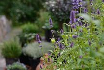 Garden - Zahrada / ...to co mám ráda na zahrádce...