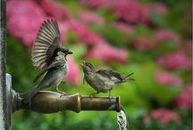 Birds - Ptáci