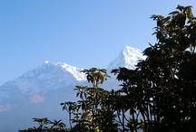 Nepal 2011 / Foto's en blogs over mijn reis naar Nepal in 2011: Poort naar de Sanctuary, kloosterverblijf en wandeltocht in de Kathmandu Vallei