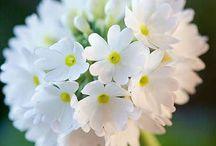 White in Garden