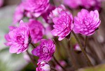 Pink in Garden