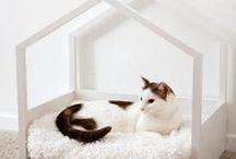 Cats Kingdom / cat design