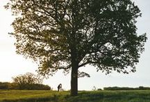 Under A Big Tree / Wedding ceremonies that take place under a big, beautiful, tree.