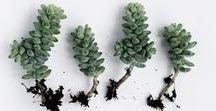 plantetes