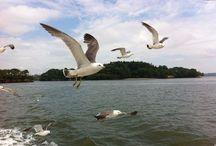 Matsushima 19/7-4/8/13