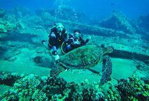 Scuba Diving / by Monica Caruso