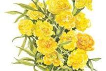 Botanical Interests Seeds - Flowers