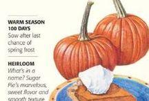 Botanical Interests Seeds- Vegetables