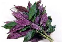 Asian Spinach / Full of nutrients and aids in living a long life!
