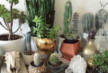 succulents / obesa, haworthia, crassula, lithops and the likes..