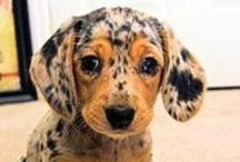 Cute Animals <3 / Awww, they leave paw prints in our hearts and mud on the carpets!