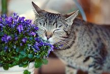 Cats / Cats / by Marissa Pappas