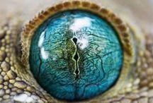 Nature elements / Otaczająca przyroda jest piękna i zaskakująca. Wiele jej elementów ma wpływ na nasze zdrowie.