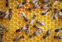 Secret life of Bees / Pszczoły to fascynujące stworzenia. Bez nich cały ekosystem i gospodarka by nie istniały. Przyglądamy się ich życiu.