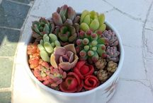 Small succulent containers